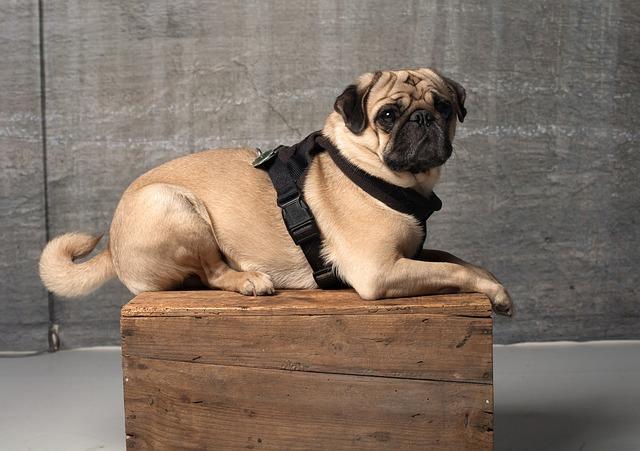 pes na bedně
