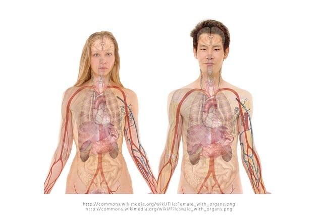 anatomie těl.jpg