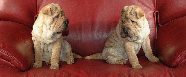 psi na sedačce